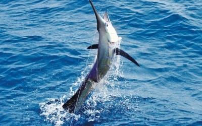 Six Caribbean Fishing Teams Compete in Offshore World Championship
